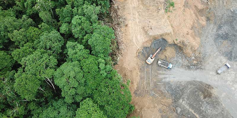 Deforestation Malaysia